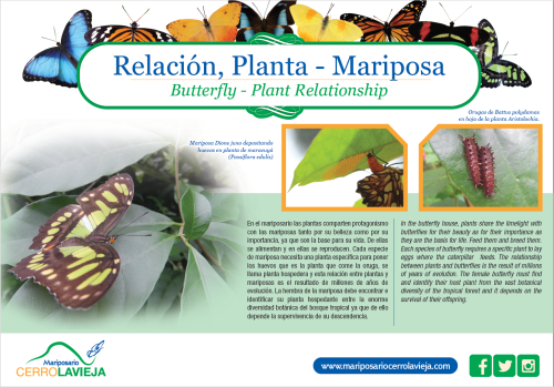 Relacion Planta Mariposa